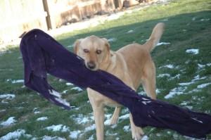Joey's blanket