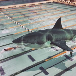 effect-shark