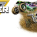 Monster Jam® is Coming to Portland!
