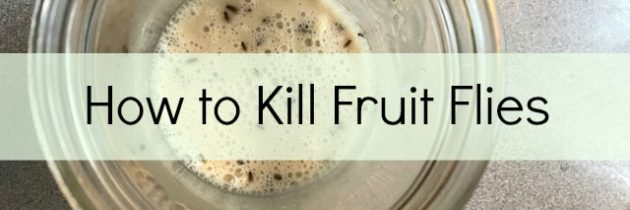 how to kill off fruit flies