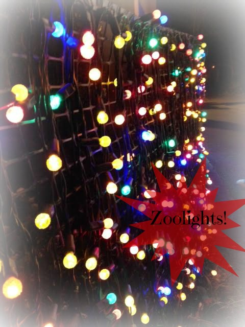 Zoolights at the Oregon Zoo – Holiday Tradition for PDX Families